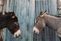 Donkeys & Horses / by Jackie Almman