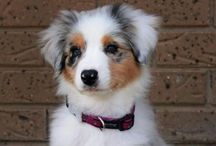 (Pooches And Pups) / Cute puppies and dogs