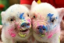 Miss Pigs Loves / Just a bunch of things I love...colour, food, art, fashion, kids, puppies and pigs :)