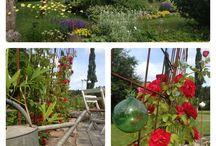 My garden in summer time