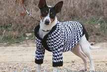 Pet Friendly / Cool stuff, patterns, and diy for your loved pets
