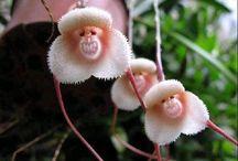 Orkideer/orchider / Planter