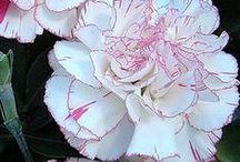 Favorite flowers / Lievelingsbloemen