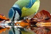 birds / photos and crafts
