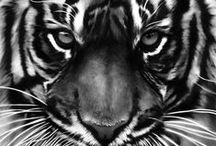ART sketchings / dessins / design dessins