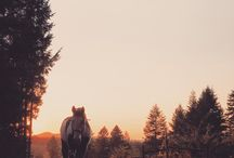 i'm a horse girl