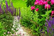 Gardening Ideas / by Brenda Lippens