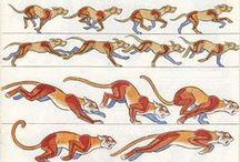 Animals | Anatomy
