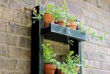 My 'Green' Hobbies / Ideas - Tips - cute shed - Small balcony garden