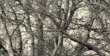 Moje Drzewa.