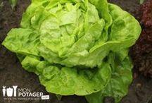 Les légumes d'été Monpotager.com / Découvrez les légumes d'été que vous pouvez cultiver dans votre #potager Monpotager.com !  http://www.monpotager.com/legumes