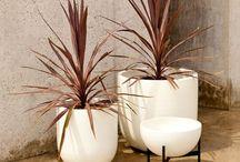 Pots / Plants / by Michelle