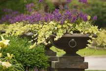 CONTAINERS / Planters, Urns, and Seasonal Plantings