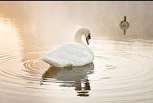 Blanco / El blanco es la combinación de todos los colores del arco iris. Se utiliza para trasmitir pureza, sencillez, sinceridad,limpieza..