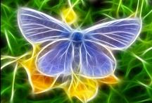 Efecto Mariposa  ஐ / Son  elegantes,de espectaculares colores,frágiles sólo en apariencia.Son el símbolo de la transformación,de una metamorfosis que todos deseamos en algún momento de nuestra vida.