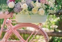 Beautiful bicycle / No lo puedo evitar.Veo una foto de bicicletas y la tengo que pinear!