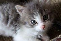 Cute animals ...