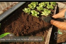How-To Garden Video Tips- GardenTV / Join us as our GardenTV experts share their tips and tricks around the garden!