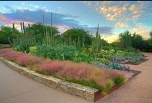 Spotlight Gardens / Dedicated to gardeners and their beautiful masterpieces.