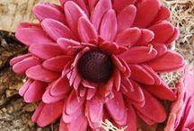 Sugerflowers