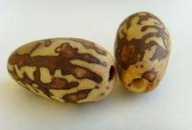 Natural Seeds Beads