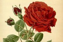 Botanical Flowers & Prettier / Botanical flowers / by Judy Farris