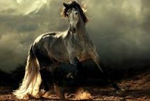 Horses / ✿Please Pin from one board only 4-5 Pins at once ✿ If you repin more than this, I'm sorry,you will be blocked✿