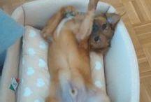Cani simpatici / Cani
