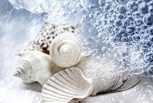 Seashells and more