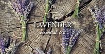 The KING of Lavandula Angustifolia / KASHMIR LAVENDER  100% Essential OIL. Altitude of 4,000 meters.  Extraction: Harvested by Hands.