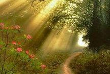 The path to my secret garden...