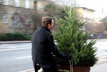 Christmas Time / Rocking around the Christmas tree