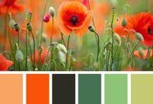 Color Corral