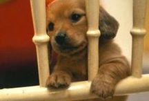 Puppys / Adorable Cute Puppys