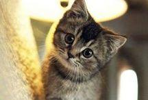 Kittens / Adorable little kittens