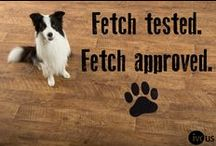 """IVC's Top Dog - Fetch! / Meet Fetch! He represents the personality of IVC US. Like #IVC, Fetch is eager to please, intelligent, energetic, agile, loyal, talented and commited. All in all, our boy Fetch positions IVC US as, """"The New Top Dog in Resilient Flooring."""""""
