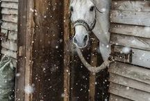 Christmas, Winter, Fall, Cold / ...