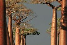 The Mysteries of Trees