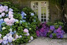 Garden / by Nicky Brogan