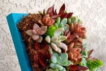 Pintratuin 'Hoe ik van mij huis een thuis maak' / #Pintratuin Mijn huisje, 60 m2, niet zo groot, maar voel me er thuis. Ben altijd op zoek naar mooie decoratie spulletjes om het nog mooier te maken. Voor binnen of op mijn balkon. Ik kan heel gelukkig worden van een nieuw meubel, of iets simpels als een mooie plant met prachtige bloemen. Ik kom dus graag bij de Intratuin. 'Like a kid in a candystore' :D
