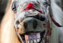 Tiere - charmant / zum lächeln, staunen und für's Herz
