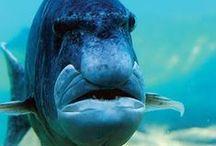 Unter Wasser / Faszinierendes unter Wasser