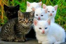Kitties / Cats. My first love.