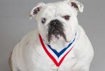 NJVMA Animal Hall of Fame Inductees / Celebrating the Human-Animal Bond Since 1996!