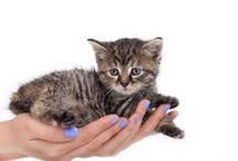 How to Love 'Em Right / Pet Care