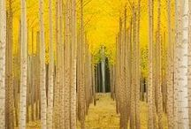 """The Changing of Leaves / Colorado is best known for it's snowy mountains BUT fall is truly an amazing time of year. The Aspens changing color among the backdrop of the mountains is truly breathtaking and explains why it's known as """"Colorful Colorado."""" Share your own photos with us! 800.215.6535 https://www.staywinterpark.com/"""