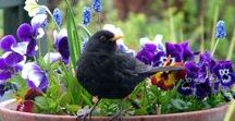 Wildlife gardening ideas / Ideas for creating a wildlife friendly garden. Planting for wildlife, bug hotels, wildflower meadows, bird feeders and plants to attract birds and insects to your garden.