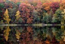WIELKOPOLSKI PARK NARODOWY / POLAND / Na południe od Poznania nad rozlewiskiem Warty. Teren polodowcowy, 14 840 ha: lasy iglaste, głównie sosna, dęby (są 200- 300 letnie), z domieszką świerków, modrzewi, brzóz, jesionów itd; 12 jezior (Jezioro Góreckie 97 ha), wyspy: Kopczysko i Zamkowa (ruiny zameczku, tysiące dzikich gęsi w okresie migracji), bagno Dębienko, (lęgowiska ptaków wodno – błotnistych), Nadwarciański Bór Sosnowy, Puszczykowskie Góry (Osowa Góra, 132 m n.p.m), Trzcielińskie Bagno oraz Czapliniec (żeruje czapla siwa).