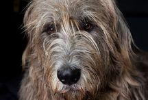 Scruffers / Dogs