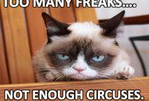 Funny fotos / Got to laugh!!!